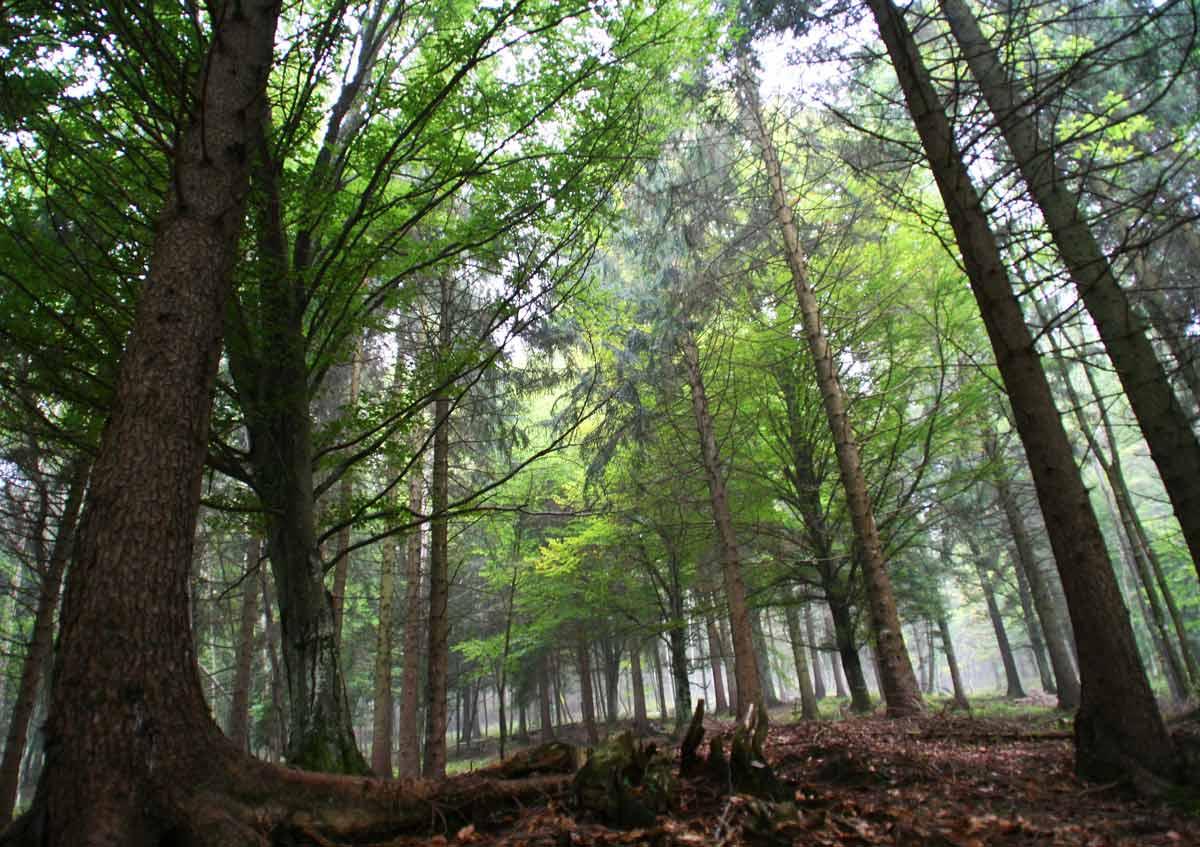 Come stanno le foreste della lombardia gardapost for Cabine della foresta lacustre