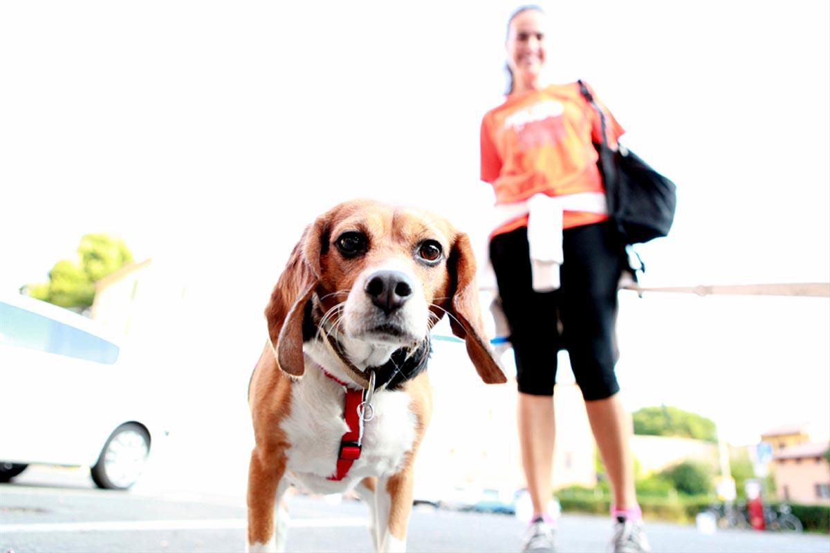 Run your dog, di corsa con Fido
