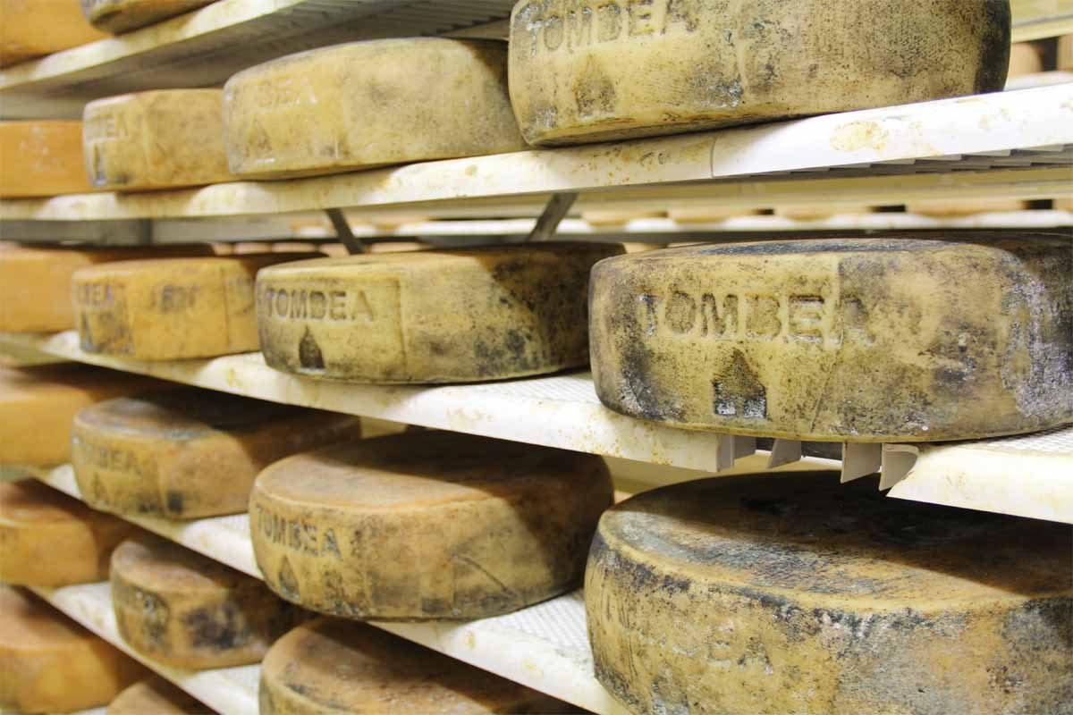 Domenica la Festa del formaggio a Cima Rest