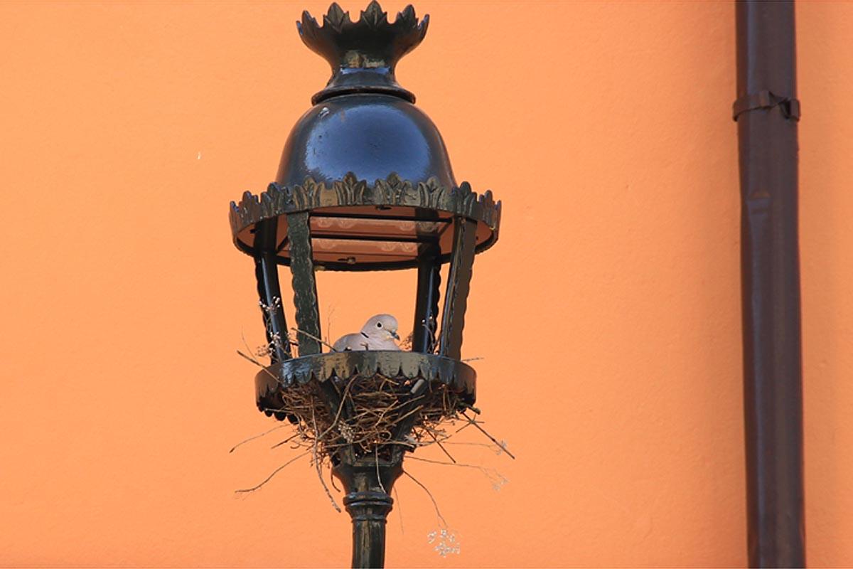La tortorella, il nido e il lampione
