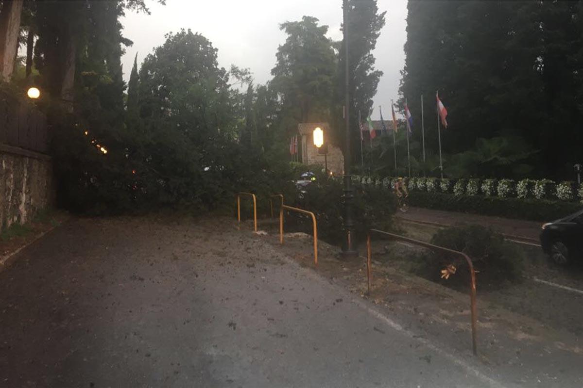 L'albero caduto questa mattina sulla 45 bis a Gardone Riviera.