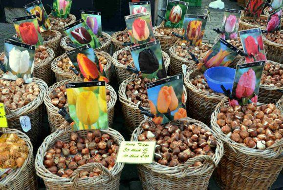 Garden Festival: un bulbo tira l'altro, piantalo!