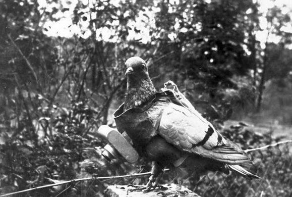 La Grande Guerra degli animali