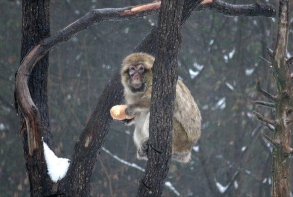 Parco Natura Viva sotto la neve: gli insospettabili che scelgono il freddo