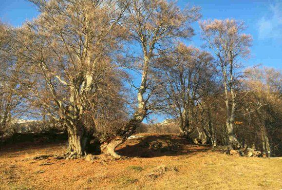 Cresce il bosco. Il rapporto Ersaf sulle foreste di Lombardia