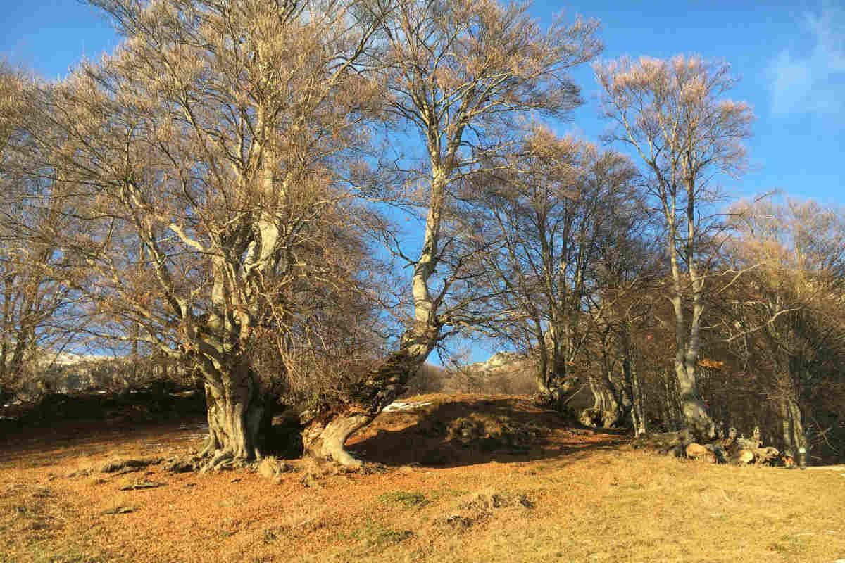 Vivaio Forestale Curno : Cresce il bosco. il rapporto ersaf sulle foreste di lombardia