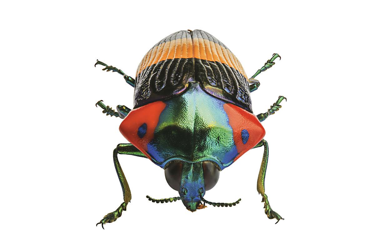 Gioielli a sei zampe, in mostra gli insetti più belli del mondo