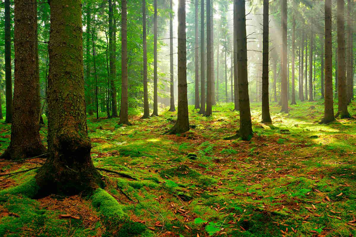 Vivaio Forestale Curno : Il bosco risorsa da valorizzare u2013 gardapost