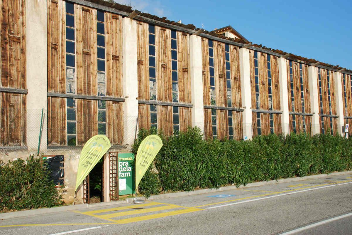 Vivaio Peschiera Del Garda domenica visite guidate alla limonaia del pra' de la fam